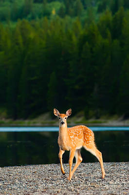 Waiting Photograph - Fawn by Sebastian Musial