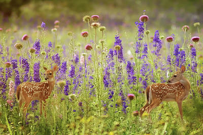 Photograph - Fawns In The Meadow by TnBackroadsPhotos