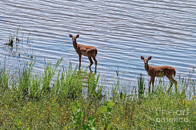 Photograph - Fawns In Water by Paul Mashburn