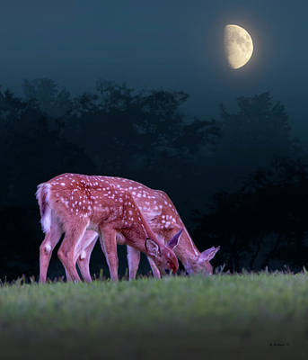 Digitally Manipulated Mixed Media - Fawns Under The Moon by Brian Wallace