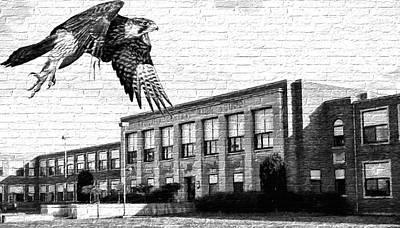 Photograph - Fchs Falcons by John Freidenberg