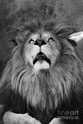 Photograph - Fear Black And White by Judy Whitton