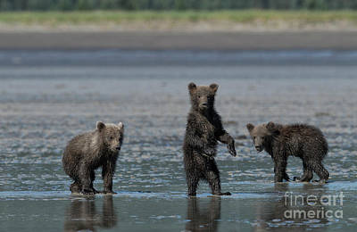Photograph - Fearsome Threesome by Sandra Bronstein