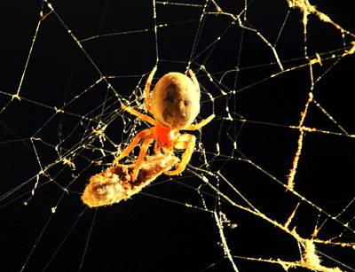 Feast Of The Spider Original