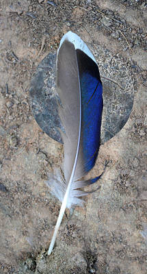 Photograph - Feather 2 by rd Erickson