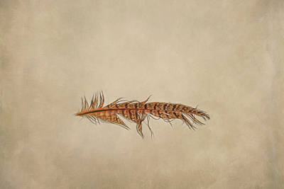 Studio Graphika Literature - Feather 2 by Scott Norris