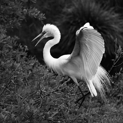 Of Birds Photograph - Feather 8-8 Bnw by Skip Willits