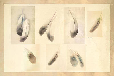 Digital Art - Feather Collage by Ann Powell