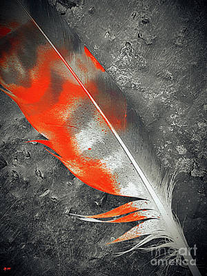 Photograph - Feather by Daniel Janda