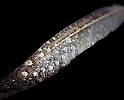 Closeup Photograph - Feather Dew by Nicklas Gustafsson