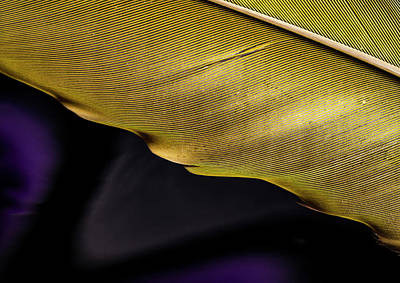 Photograph - Feather Edge by Jean Noren