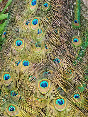 Art Print featuring the photograph Feather Finesse by Margaret Bobb