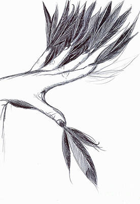 Drawing - Feather Fingers by Haley Howard
