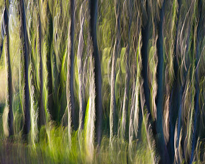 Photograph - Feather Forest by Sarah-fiona  Helme