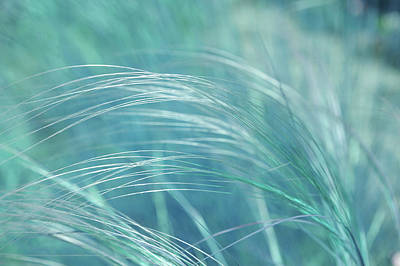 Photograph - Feather Grass. Blue Meadow by Jenny Rainbow