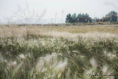 Photograph - Feather Grass by Wendy Carrington