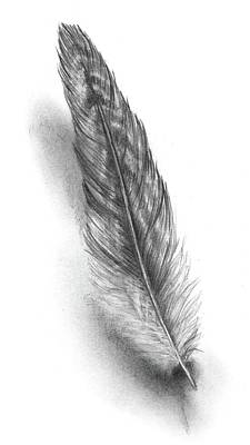 Drawing - Feather by Heidi Kriel