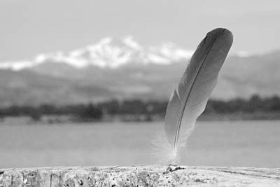 Feather In Black And White Art Print by James BO  Insogna