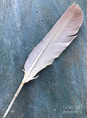 Photograph - Feather Of A Dove by Leona Atkinson