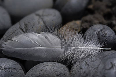 Photograph - Feather On The Rocks by Robert Potts