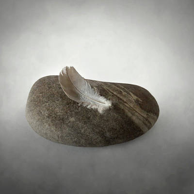 Photograph - Feather Weight by David and Carol Kelly