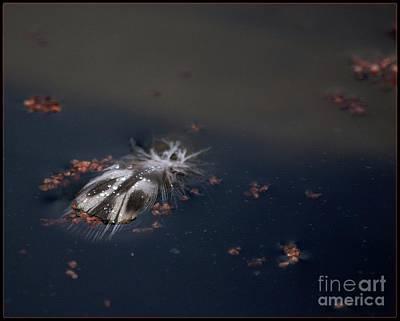 Photograph - Featherbug by Angela Murray