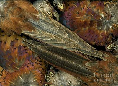 Pheasant Mixed Media - Featherdance by Christian Slanec