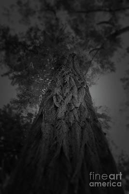 Photograph - Feathered Bark by Paul Cammarata