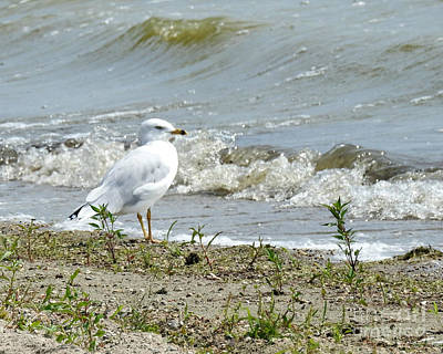 Photograph - Feathered Beach Goer by Kathy M Krause