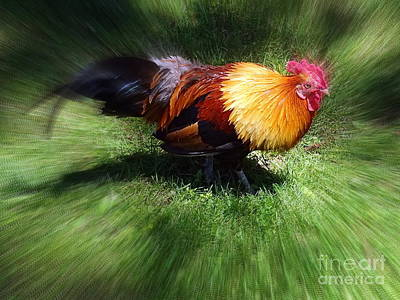 Photograph - Feathered Beauty by Ed Weidman