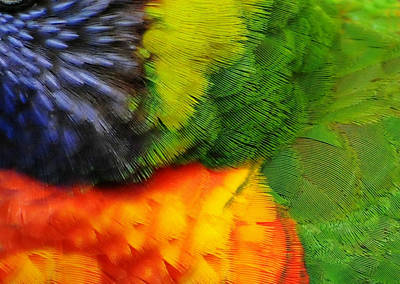 Photograph - Birds Of A Feather by Diana Angstadt
