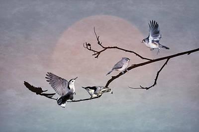 Photograph - Feathered Kingdom by Leda Robertson