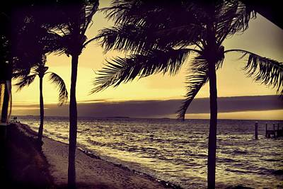Photograph - Feathered Palm Kings  by JAMART Photography