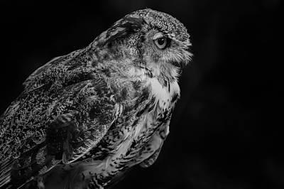 Photograph - Feathered by Rae Ann  M Garrett