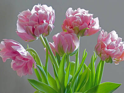 Photograph - Feathered Tulips 3 by Jeff Brunton