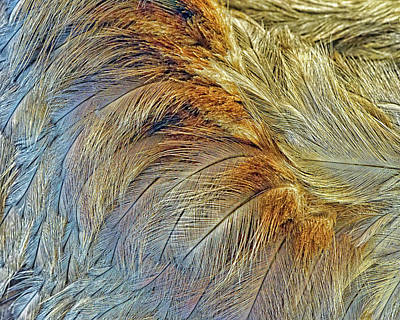 Photograph - Feathers - Abstract by Nikolyn McDonald