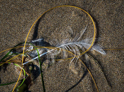 Photograph - Feathers And Seaweed On The Beach by Robert Potts