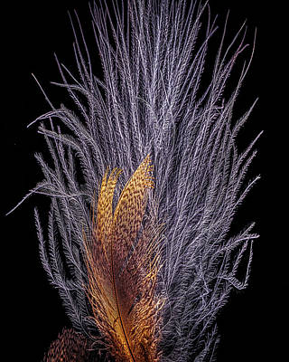 Photograph - Feathers by Bob Orsillo