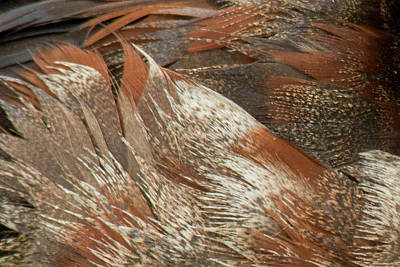 Photograph - Feathers by Frank Madia