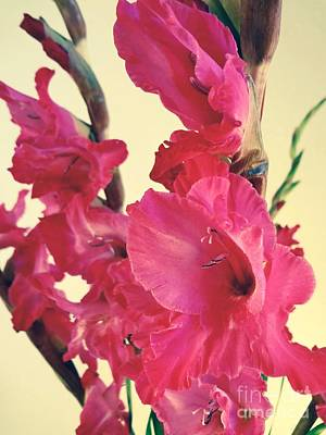 Photograph - Feathers In Pink by Gem S Visionary