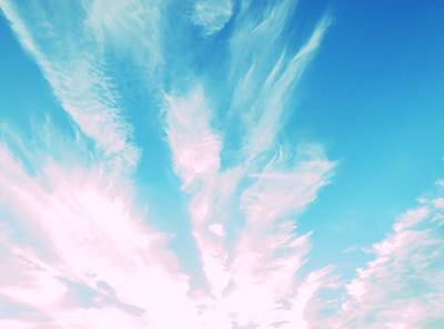 Photograph - Feathers In The Sky by Judy Kennedy