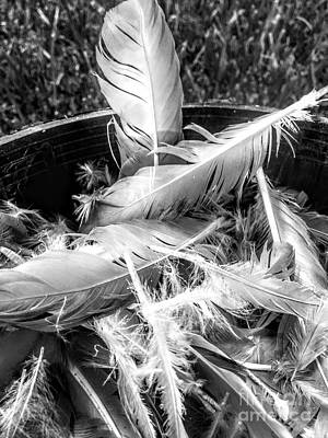 Photograph - Feathers by Robin Lewis