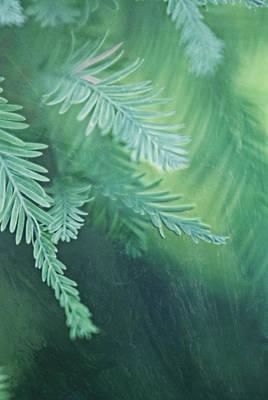 Susann Serfezi Photograph - Feathery by AugenWerk Susann Serfezi