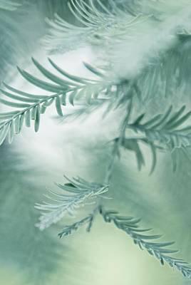 Susann Serfezi Photograph - Feathery Leaves by AugenWerk Susann Serfezi
