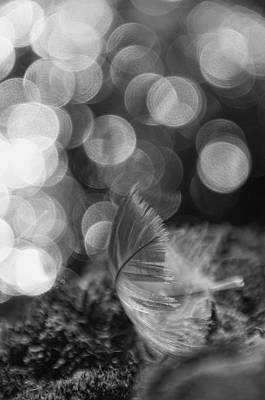 Photograph - Feather Light - Bw by Marilyn Wilson