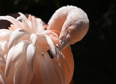 Photograph - Feathery Pink by Fraida Gutovich