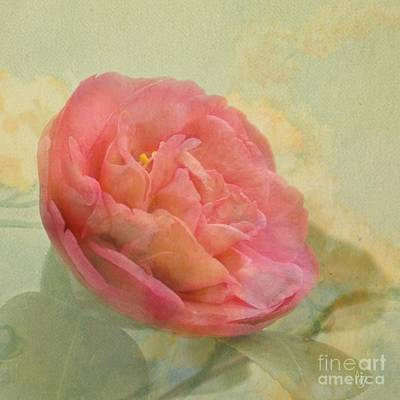 February Camellia Art Print by Cindy Garber Iverson