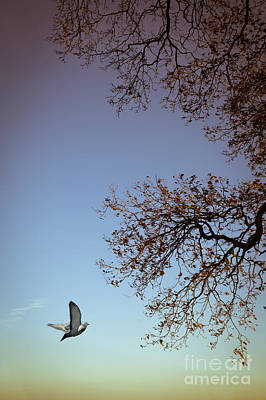 Photograph - February Flight by Jan Bickerton