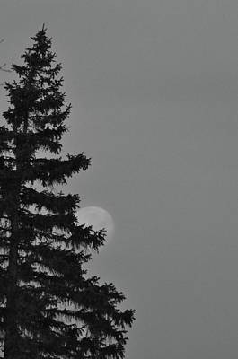 Luna Photograph - February Morning Moon by Maria Suhr