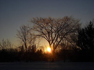 Photograph - February Sunrise Behind Elm Tree by Kent Lorentzen